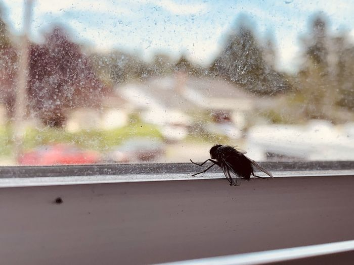 Close-up of fly on glass window