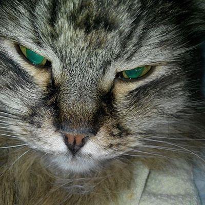 #cat #cats #catsagram #catsofinstagram #instacats #instagramcats #mycat #katz #katzen #caturday #catoftheday #2014 Cat Cats Katzen Caturday Mycat Catsofinstagram Instagramcats Catsagram Catoftheday 2014 Instacats Katz Cat_features