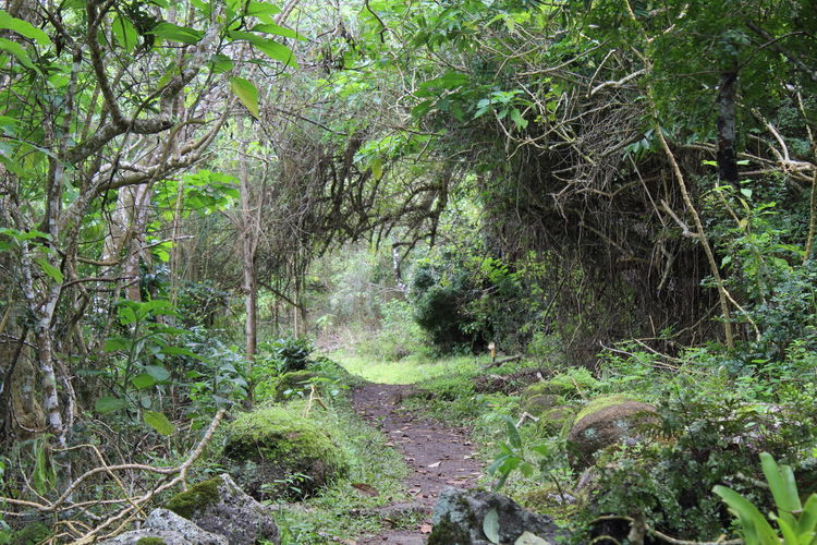 Forest Tropical Forest Pathway Jungle Trail Nature Trekking