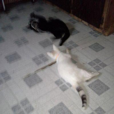 Pretty little kitties