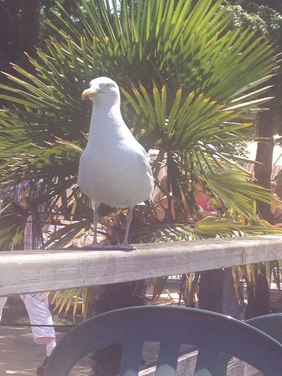 Capturing Freedom free like a bird. Freedom Birds Summer