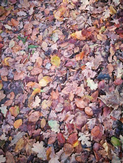 Beautifully Organized Nofilter Gravity Wind Autumn Goldpolishautumn