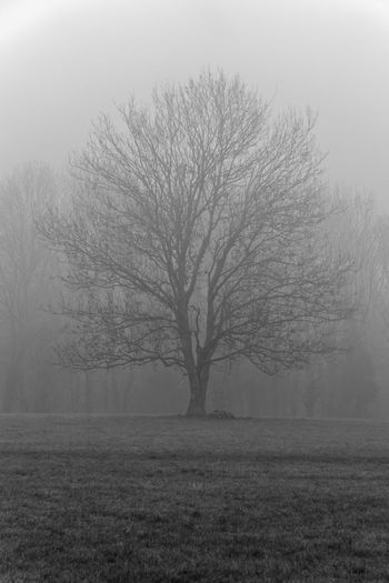 Bare trees on field during winter