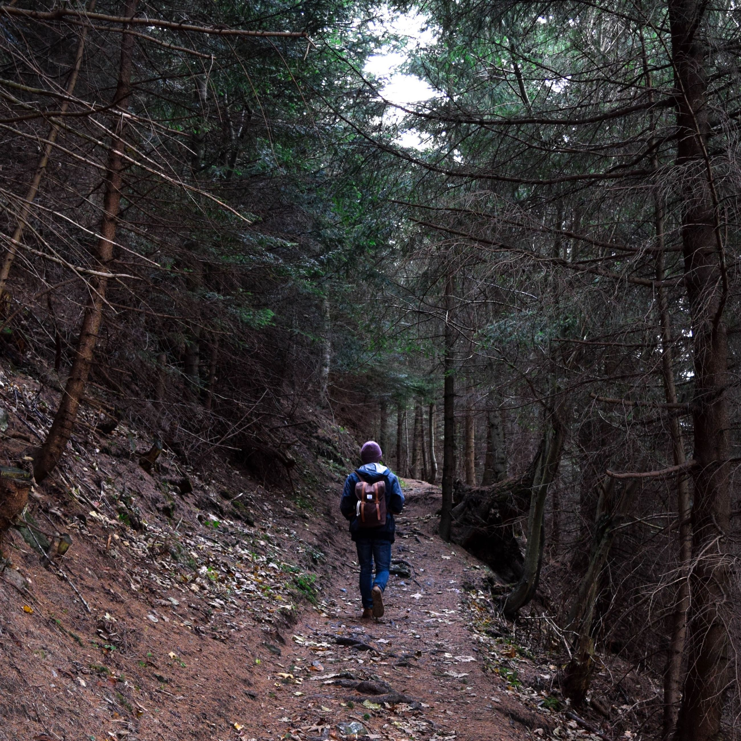 tree, full length, forest, rear view, lifestyles, leisure activity, the way forward, walking, men, hiking, casual clothing, nature, dirt road, tree trunk, tranquility, woodland, backpack, growth