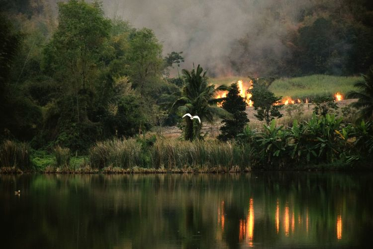 View of forest fire by lake