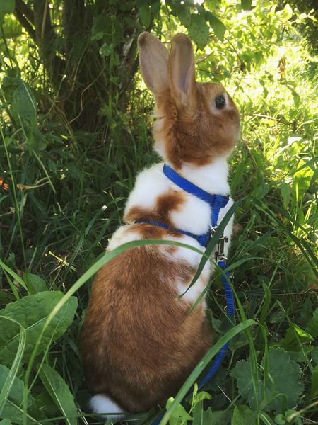 Domestic Animals Rabbit 🐇 Animal Themes Pets Grass No People Outdoors