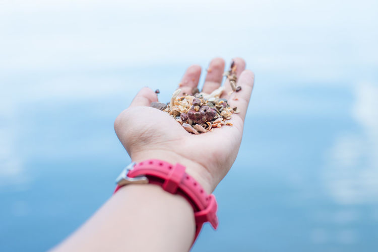 Shell Human Body Part Sea Human Hand Hand Holding One Person Beach Water Day Focus On Foreground Personal Perspective Body Part Nature Close-up Real People Land Unrecognizable Person Lifestyles Horizon Over Water Finger Outdoors Gravel Pour EyeEmNewHere
