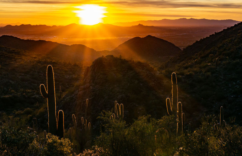 Scenic view of mountains and saguaro cactus during sunset