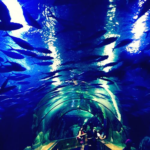 Take that Ripleys, this is a water tunnel! Aquarium València SPAIN Science L'oceanografic