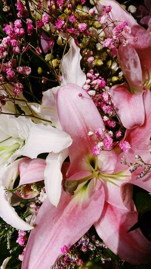 Flower Head Flower Pink Color High Angle View Close-up Plant Pale Pink In Bloom Blooming Plant Life Petal Blossom