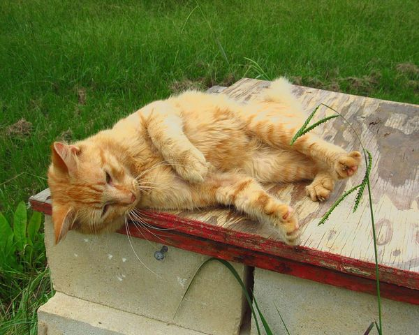 Pet Portraits Furfamily Relaxing Stretching Sleeping Cat Lying Down Feline Domestic Cat Domestic Animals Animal Themes Relaxation Lazy Cat Cat Napping Funny Anımals Lazy Day Attention Please Outdoors Pets Nature One Animal Mammal Sleeping High Angle View Resting No People