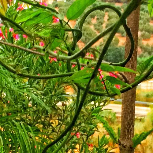 Shapes In Nature  Twisted Stem Beautiful Nature Campo Spain Color Palette