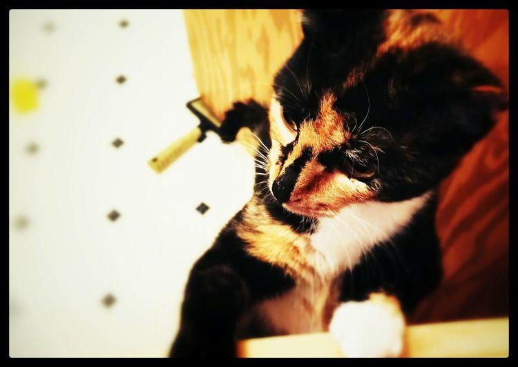 Orchid...loving foster girl ❤ Adopt Me Foster Cat Foster Animals Beautiful Animals  Vegan