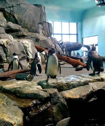 Monterey Bay Aquarium Penguin LIFEMATES 🐧🐧 Penguins Check This Out Aquarium Life Chilling Staringcontest