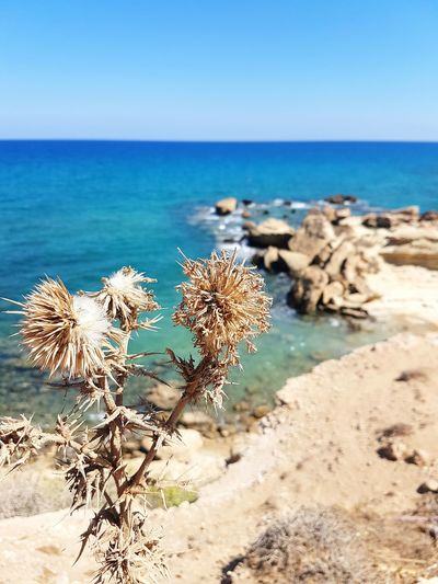 Sea Nature Beach Plant Sunlight No People Sky Beauty In Nature Ecosystem  Outdoors Water Day Travel Destinations Horizon Over Water Clear Sky Cyprus Horizontal Blue