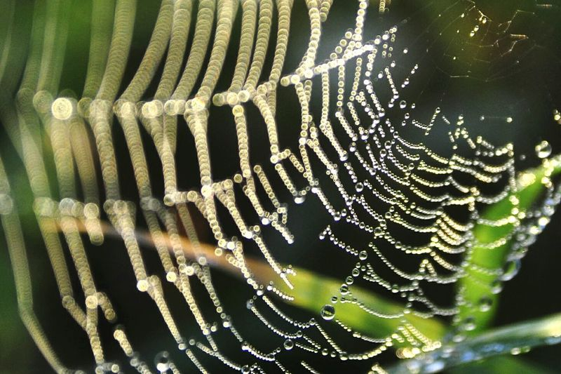 Spider Web Fragility Drop Nature Beauty In Nature Wet Close-up Outdoors Web Taking Pictures Life Caribbean Life Nature Macro Photography Puerto Rico Tela De Araña Dew Drops Shapes And Forms