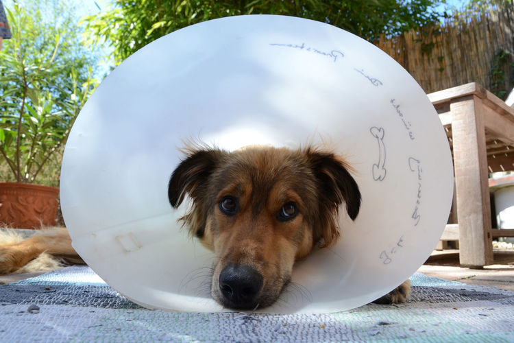 Close-Up Of Dog Wearing Protective Collar While Resting Outdoors