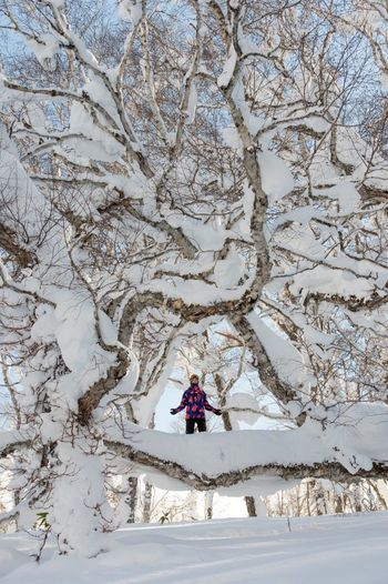 Japan Series Hokkaido Kimmy Fasani enjoys the zen nature of this old growth tree on the Notth Island at a place called Rusutsu