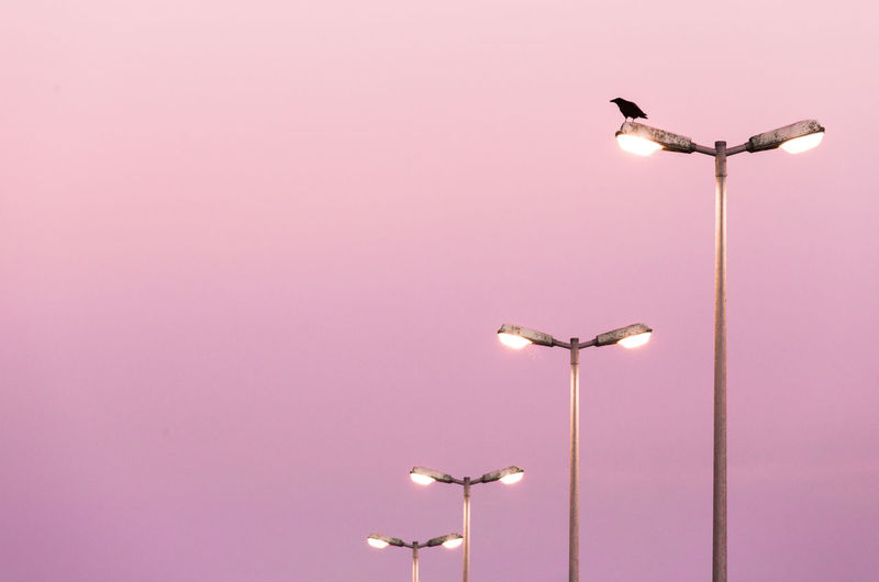 Low Angle View Of Bird Perching On Street Lamp