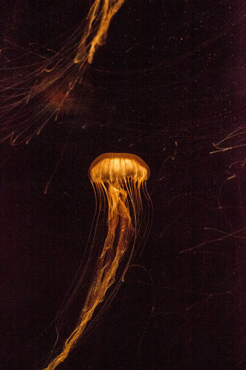 Close-up of jellyfishes swimming in sea