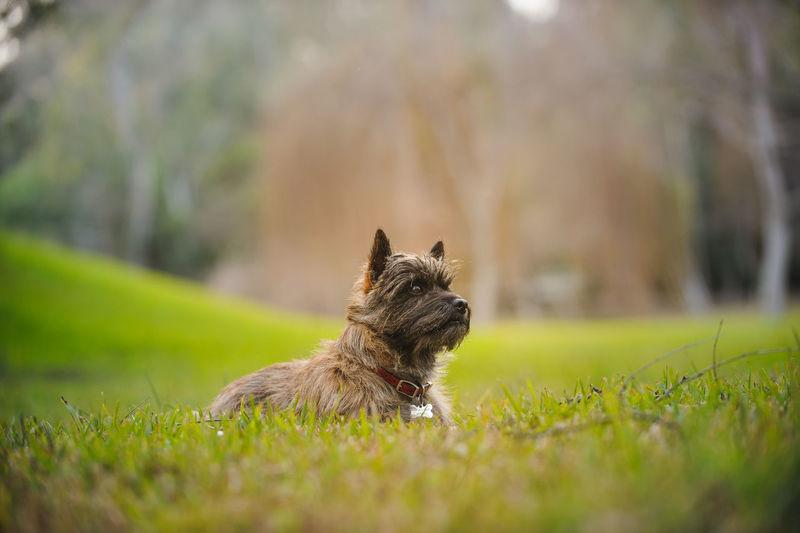 Puppy Sitting On Field
