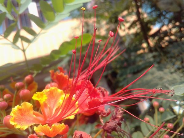 Flower Plant Nature Beauty In Nature Growth Close-up Red Fragility Petal No People Leaf Outdoors Blossom Freshness Day Pollen Flower Head Rhododendron Pistil
