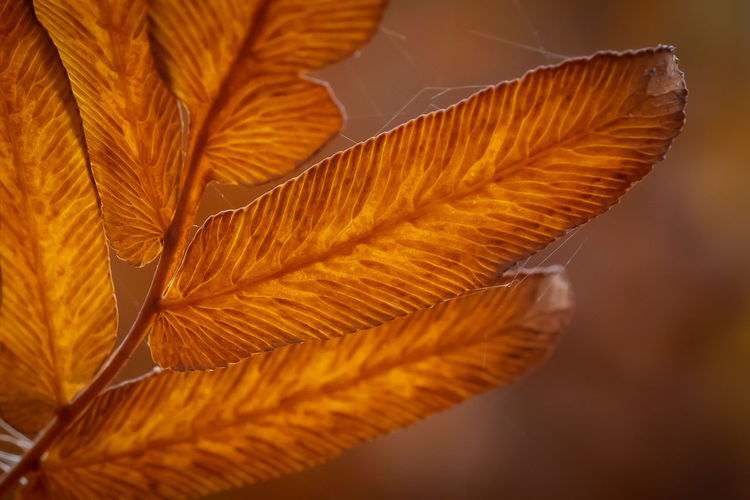 Autumn Leave -