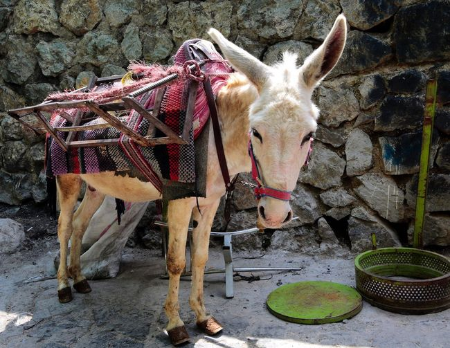 Portrait of donkey standing against stone wall