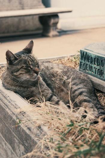 Cat Gato Recoleta Recoleta, Bs.As , Argentina