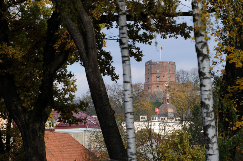Tree Architecture Plant Built Structure Building Exterior Nature Building Day Tree Trunk Trunk No People Growth Branch Outdoors Sky Place Of Worship City House Residential District History Vilnius Vilnius Old Town Vilnius, Lithuania Gediminas Tower Gedimino Pilis