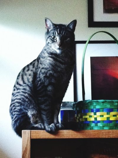 Easter basket cat Domestic Cat Pets Domestic Animals Feline Cute Pets Close-up Crazy Cat Tabby Tiger Cat