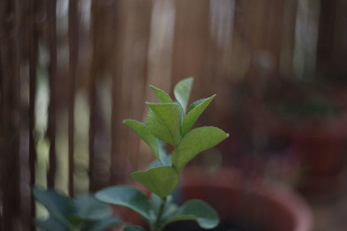 Bokeh Photography Color Sperimental Outdoors Fragility Day Freshness