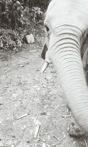 Elefant love. Uganda  Protect Elephants Wildlife & Nature Education