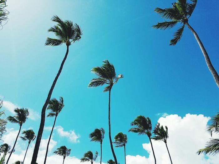 Tropical Coqueiros Sky Beach Brazil
