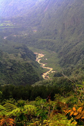 Cikunir Valley seen from Mt Galunggung Galunggung Mountain Beauty In Nature Cikunir Valley Day Forest Green Color Growth High Angle View Landscape Lush Foliage Mount Galug Mountain Nature No People Outdoors Scenics Tranquil Scene Tranquility Tree