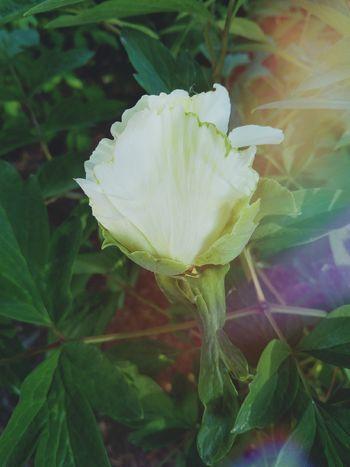 Flower Head Flower Leaf Petal Close-up Plant Green Color