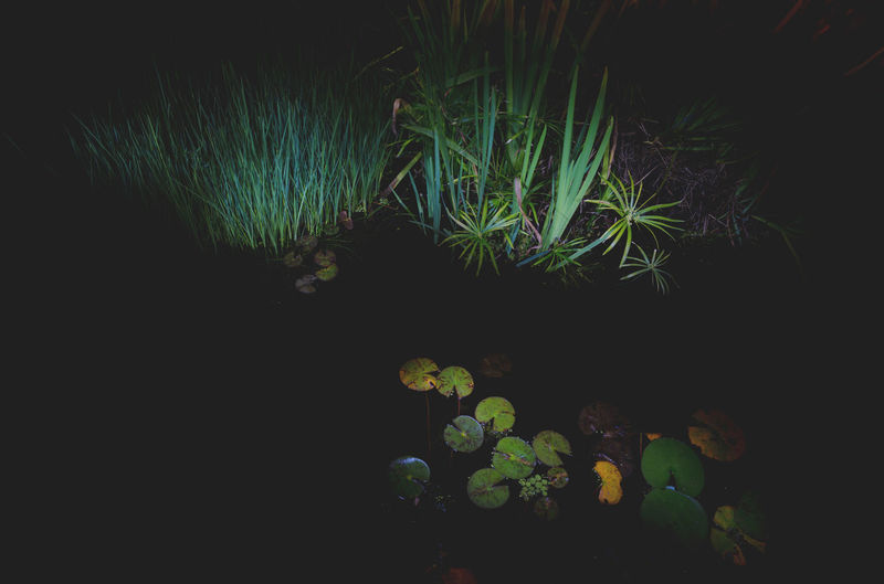 Moon Nights Sydney Darkness MoonNights Nightphotography Tranquility Waterlilies Beauty In Nature Botanical Contrasting Colors Dark Beauty Darkness And Light Grass Growth Haunting  Lightpaint Longtimeexposure Mysterious Nature Night Nightscape Pond Life Water Water Plant