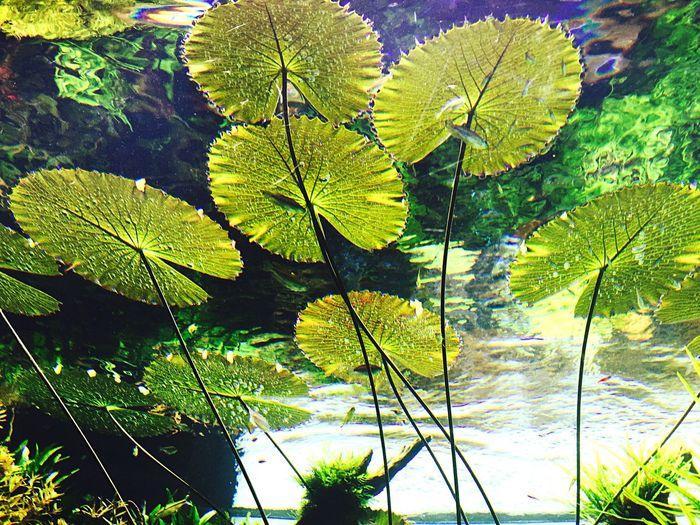 Photos That Will Restore Your Faith In Humanity Freshwater Aquarium by Takashi Amano Aquatic Plants Preserving Nature Oceanario Lisboa
