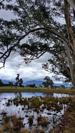 Grampian National Park Australian Photographers Landscape_photography EyeEm Best Shots Australian Landscape Water Reflections Tree Reflection Water Landscape Beauty In Nature Outdoors Tranquility Scenics Cloud - Sky Growth Branch Blue Eucalyptus Trees Eucalyptus Mountain My Cloud Obsession☁️ Backgrounds Rural Scene Framing The View