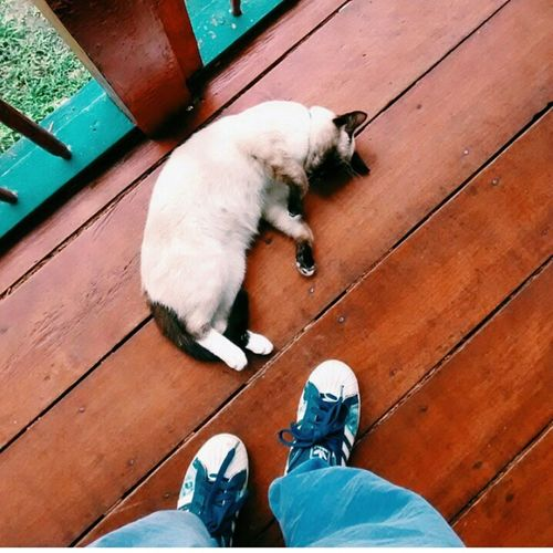 Cat Lovers Superstars 😏🔝✔️ Enjoying Life