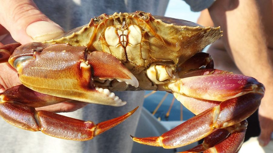 Cropped image of hand holding crab