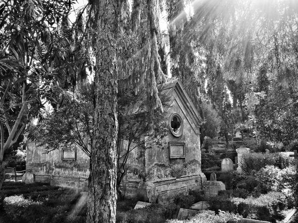 The non catholic cemetery in Rome Spirituality Tree Sculpture Tranquil Scene Tranquility Outdoors Architecture Rays Of Light Ray Of Light Urban Exploration Change Your Perspective Another World Blackandwhite Blackandwhitephotography Black And White Blackandwhite Photography Black & White Black&white Oasis Black And White Collection  Black And White Photography Urbanphotography Think Different Blach&white