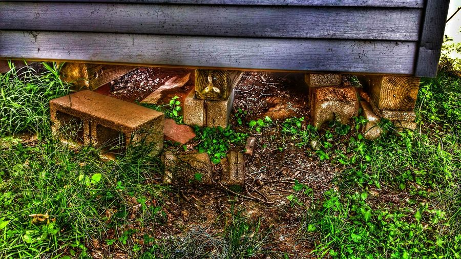 This is the ground hog's Hideout ToolshedHidden Creatures Random Acts Of Photography