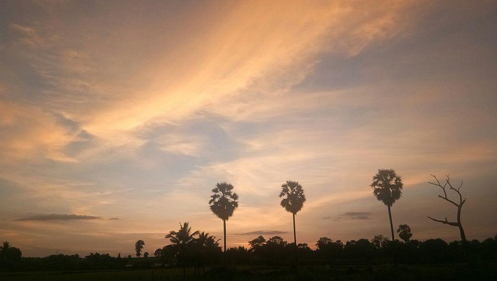 เด็กเทคนิค นครราชสีมา Thailand Thailand Photos วิวสวย ท้องฟ้า ท้องฟ้ายามเย็น Tree Sunset Multi Colored Silhouette Sunlight Sun Field Sky Landscape Cloud - Sky Single Tree Patchwork Landscape Streaming Growing Dramatic Sky Tree Trunk Atmospheric Mood Oilseed Rape Poppy Forked Lightning Sky Only Blooming Rolling Landscape