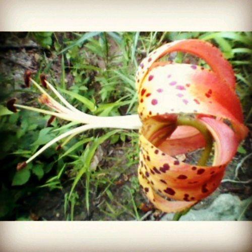 Flower Weird Unique Ohiopyle