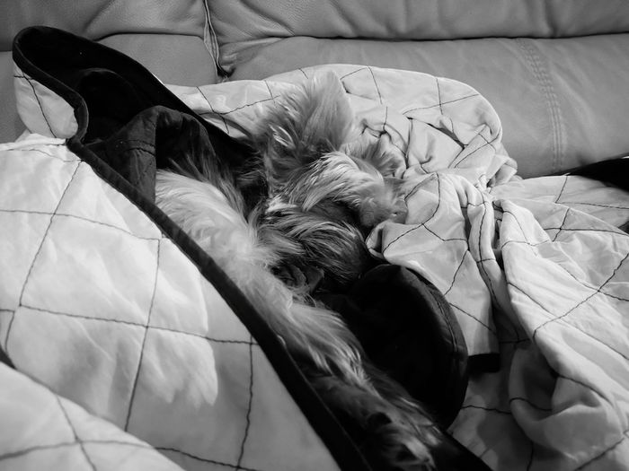 Sleeping like a rockstar 😂😂 Doggy Love Dog Love Dogs Of EyeEm Dog Dog In Bedroom Dog In Bed Dog Sleeping In Bed Dog Sleeping  Bedroom Bed Textile Close-up
