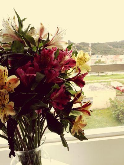 Explosión de colores que nos da las flores! Flower Beauty In Nature Bunch Of Flowers