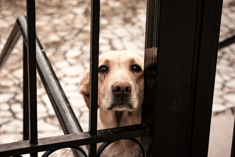 Sadness EyeEm Selects Pets Portrait Dog Looking At Camera Close-up Sky Puppy Fence Peeking