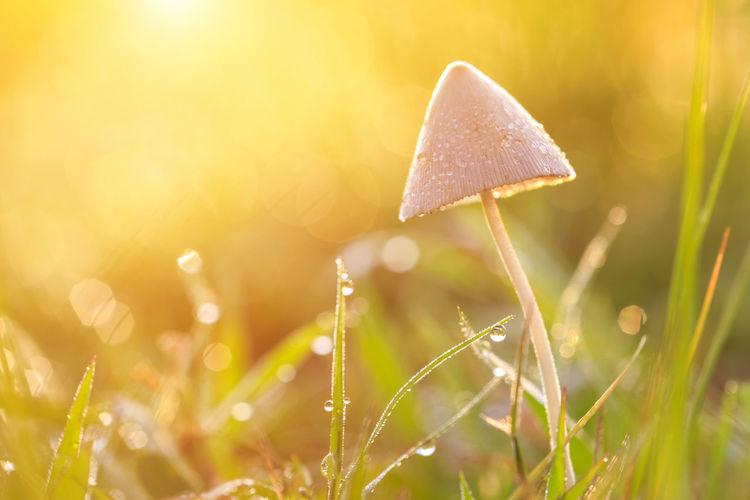Close-up of wet mushroom growing on field