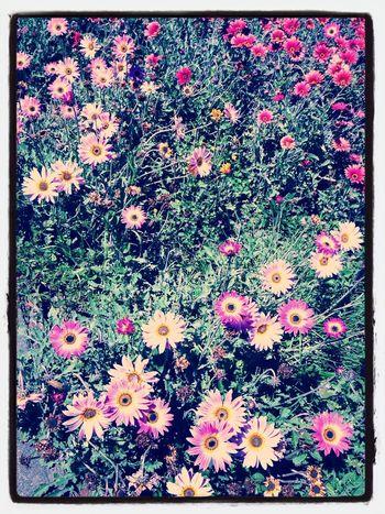 Flowers Arauco Chile Enjoying The Sun